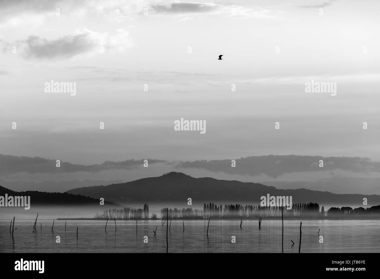 A seagull flying over a lake at dusk, with mist and beautiful, soft tones - Stock Image