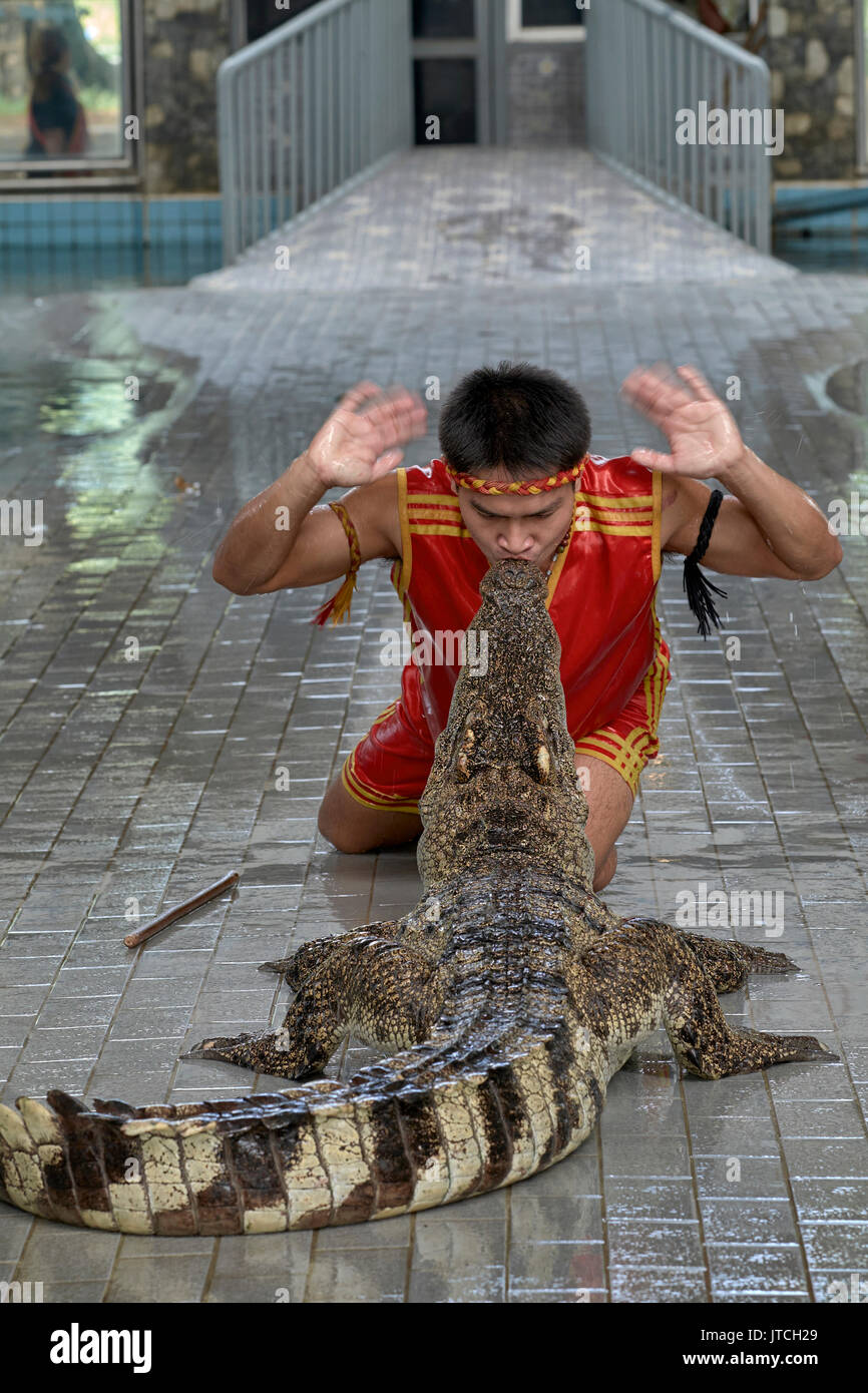 Crocodile show at Thailand with man kissing a large crocodile. A very precarious occupation and example of human animal interaction. - Stock Image