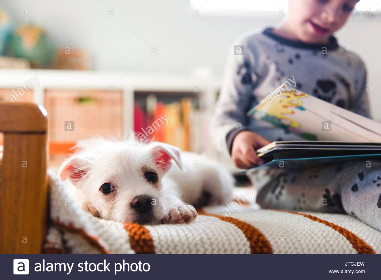 A puppy sitting on a bed next to a child, boy reading a book. - Stock Image