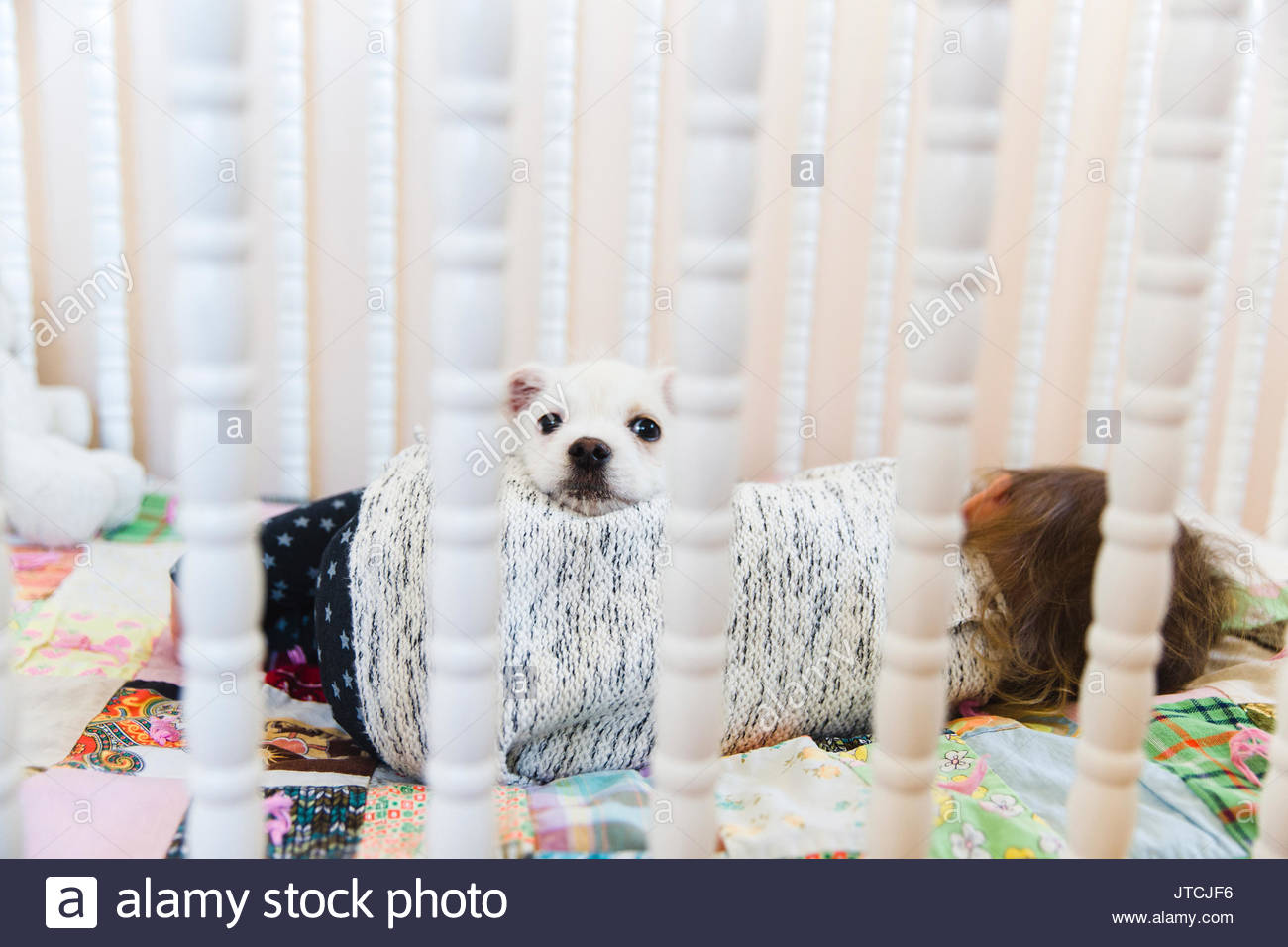 A puppy and a baby lying on a patchwork quilt in a cot. - Stock Image