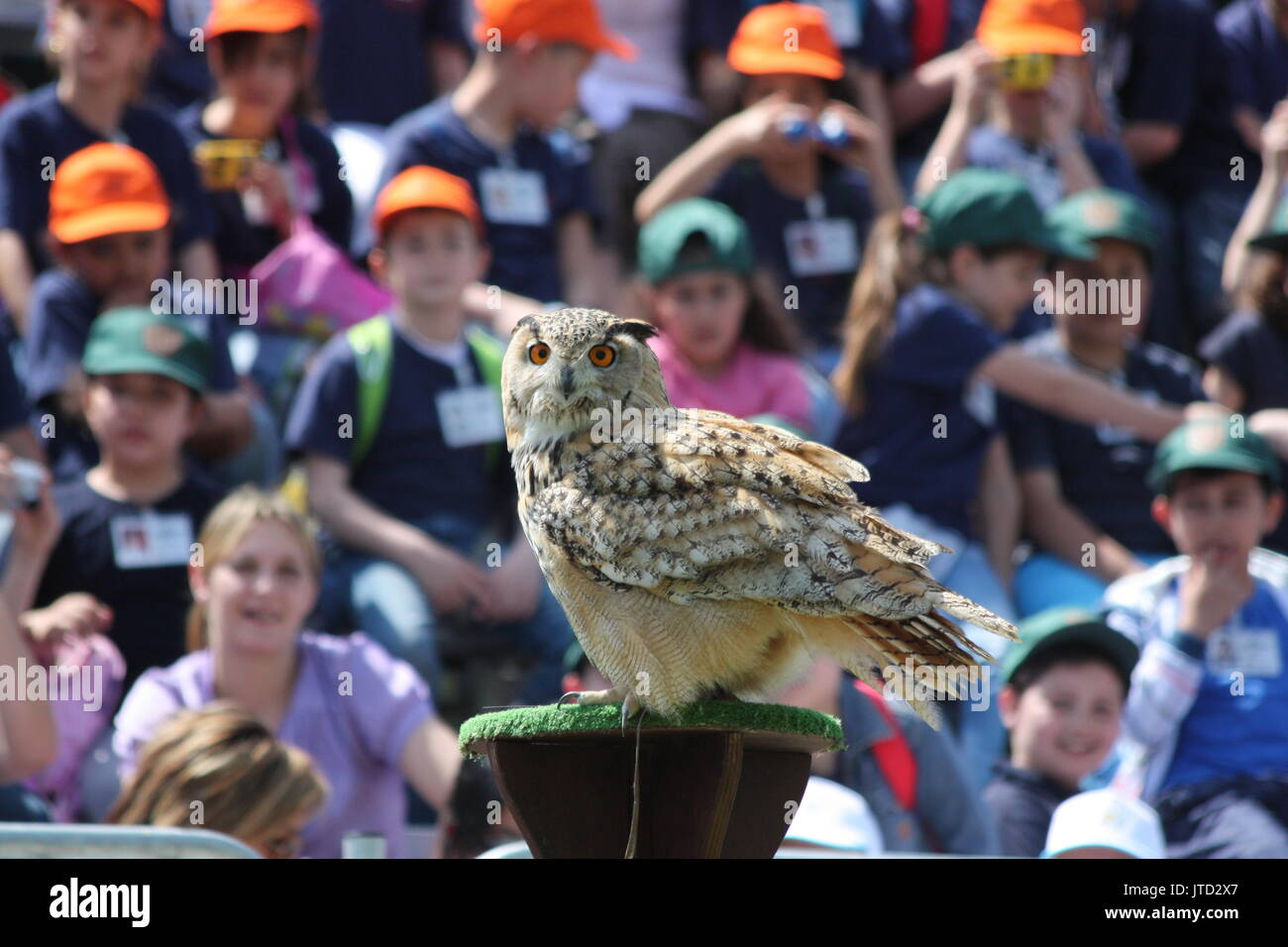 TORVAIANICA, ITALY - MAY 27, 2010: Eurasian eagle owl (Bubo Bubo) impressing his audience during a public show. - Stock Image