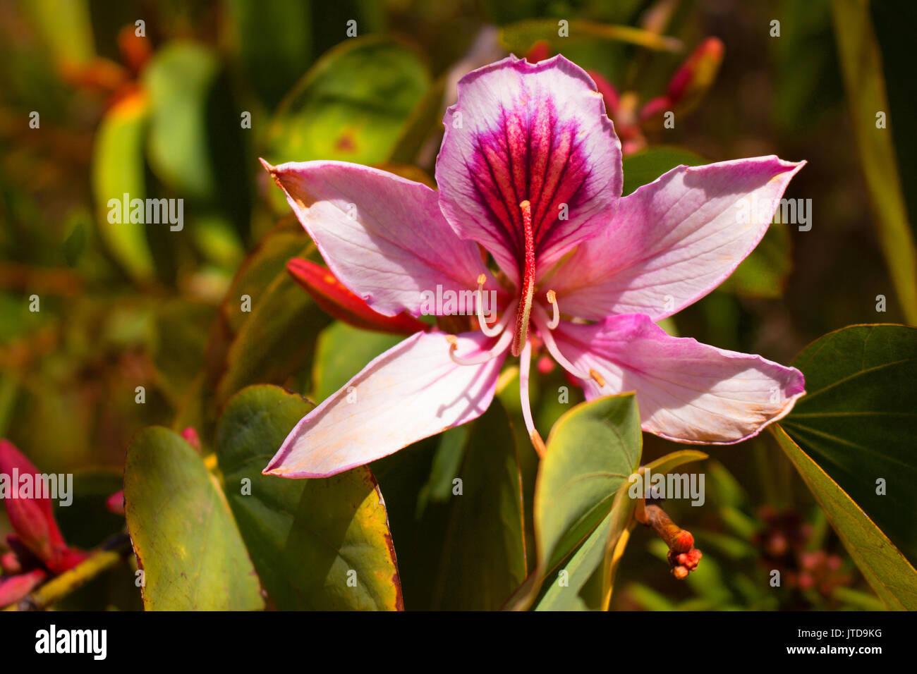 Flower. Beautiful Mediterranean pink flowers. Spring decoration. - Stock Image