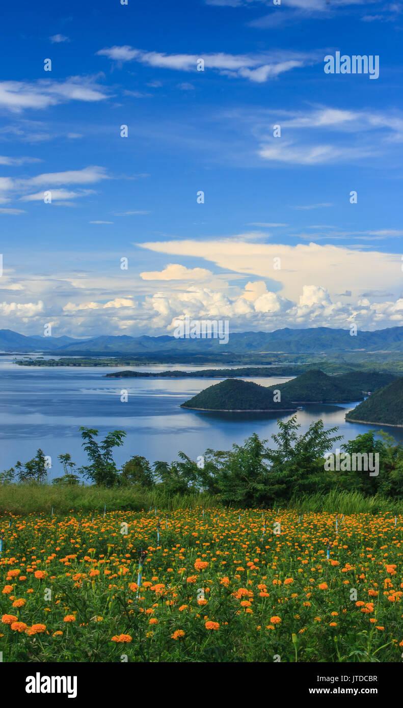 beautiful marigold garden in front of blue Srinakarin dam with clear blue sky, Kanchanaburi province, Thailand - Stock Image