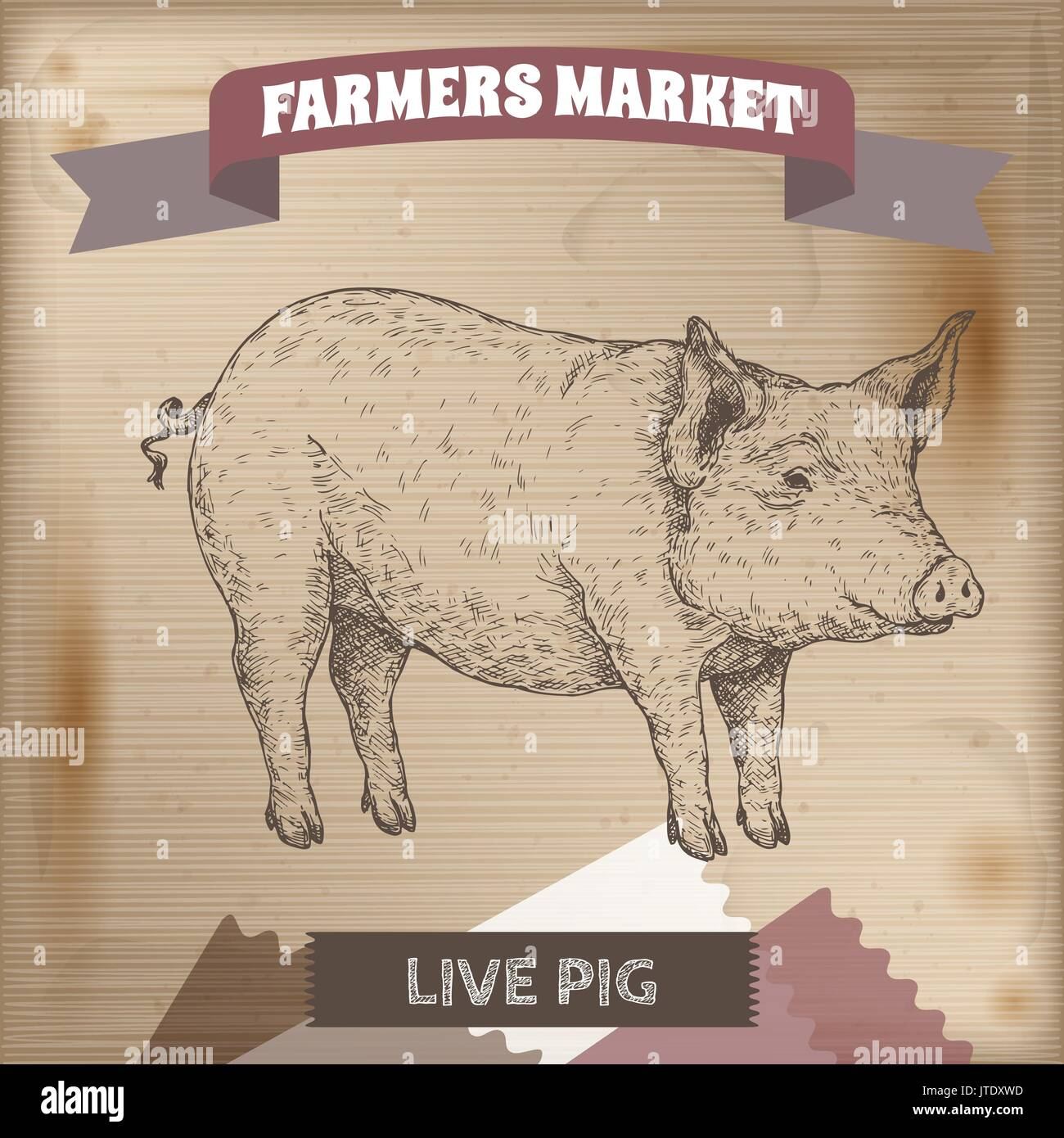 Vintage farmers market label with live pig. - Stock Vector