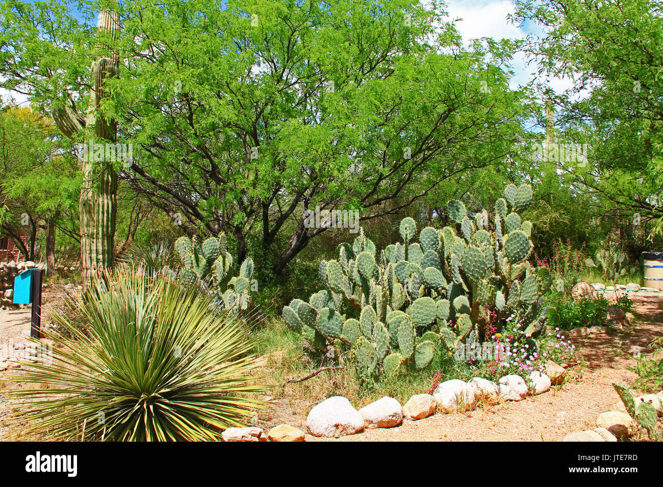 Butterfly garden on the La Posta Quemada Ranch in Colossal Cave Mountain Park in Vail, Arizona, USA near Tucson. - Stock Image