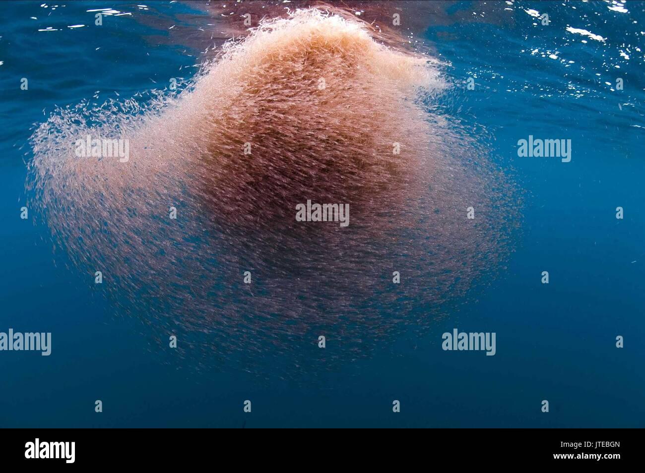 KRILL OCEANS (2009) - Stock Image
