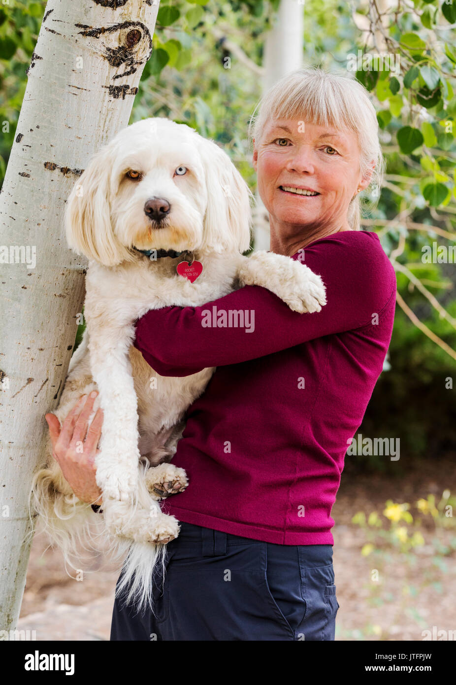Outdoor portrait of senior female a Tibetan Terrior dog; Colorado; USA - Stock Image