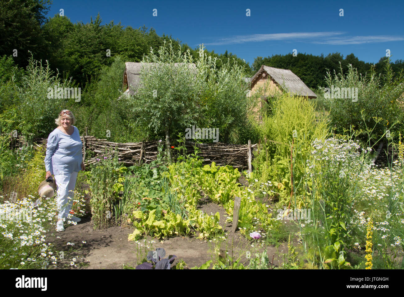 A visitor explores the vegetable garden at the Oldenburger Wallmuseum in Oldenburg-in-Holstein, Germany, which recreates a medieval Slavonic community - Stock Image