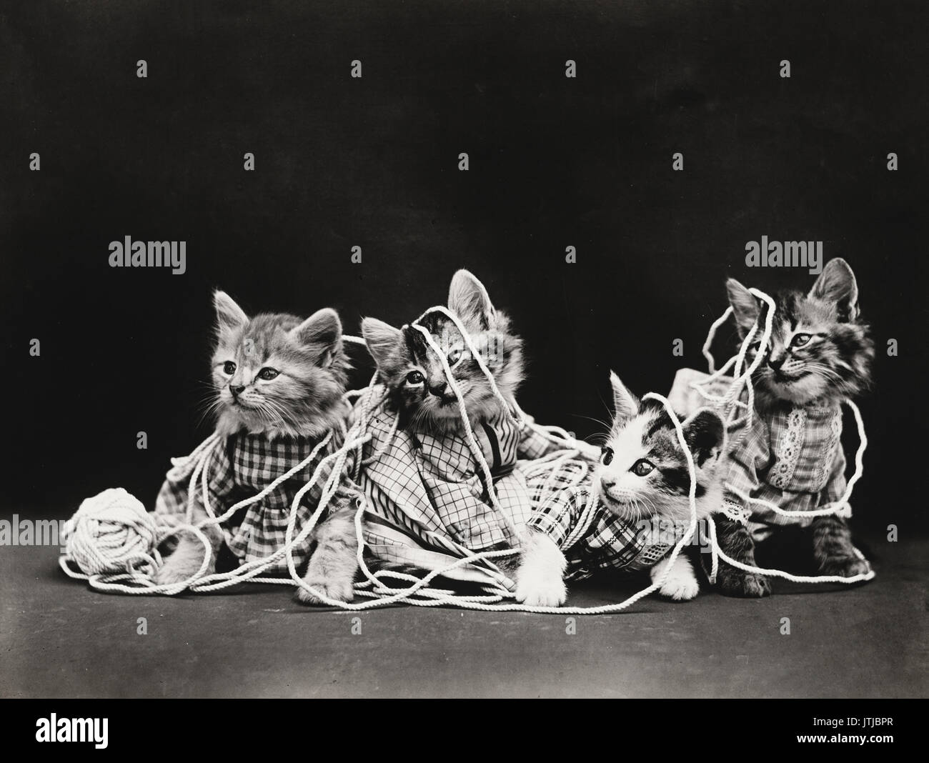 The Entanglement - Vintage Photo of Four kittens wearing clothes playing with a ball of twine. - Stock Image