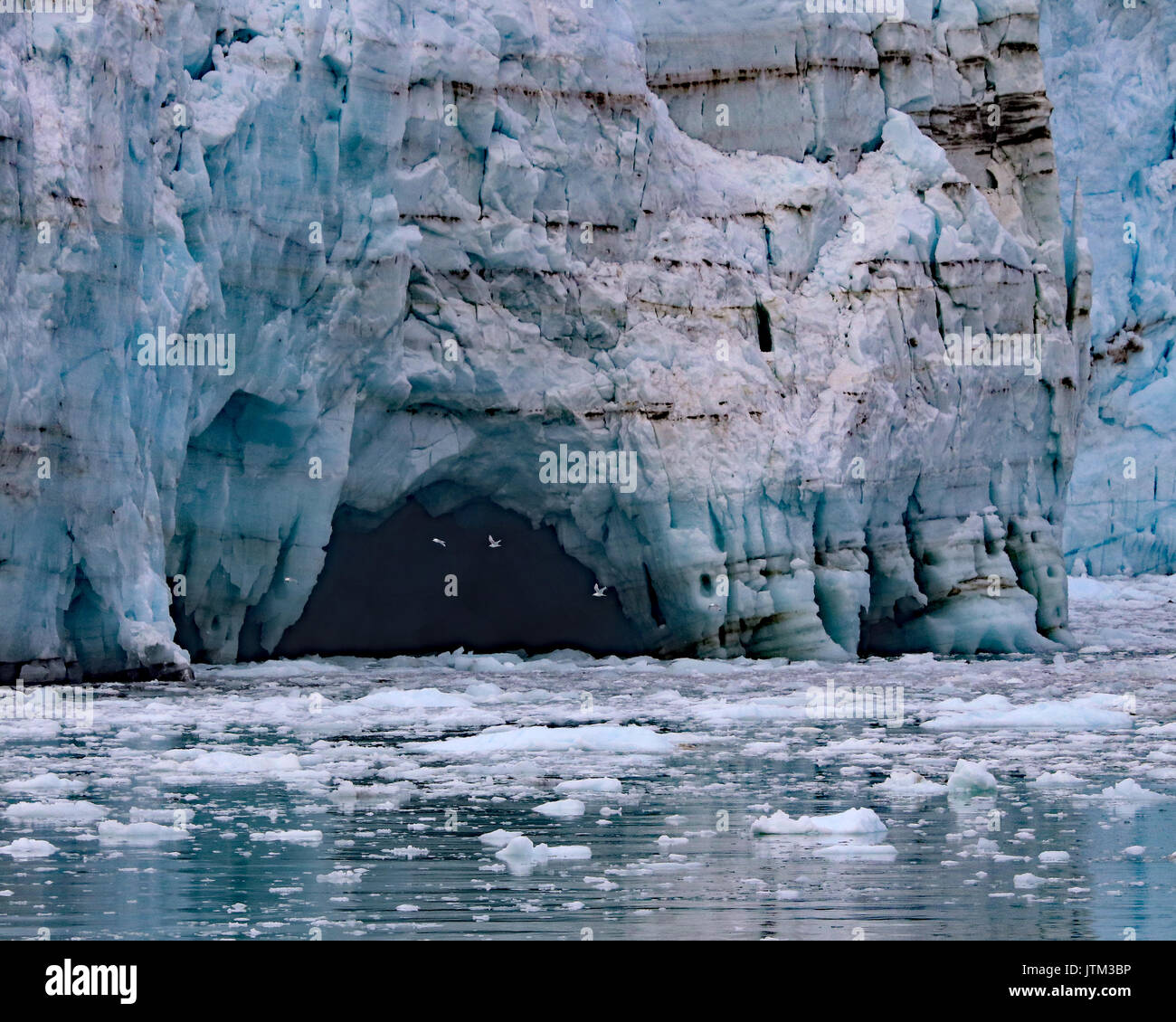Sea gulls flying into melt water cave at base of Margerie glacier - Stock Image