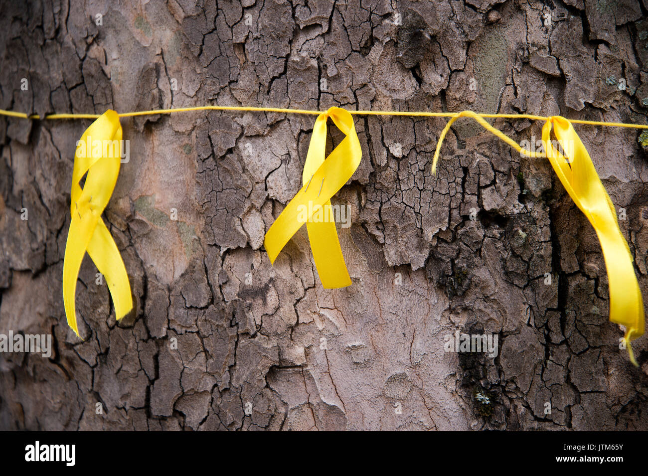 Grenfell Tower, West London. Aftermath of the tragedy. Yellow ribbons to honour the missing tied around a tree near the burnt-out tower. - Stock Image