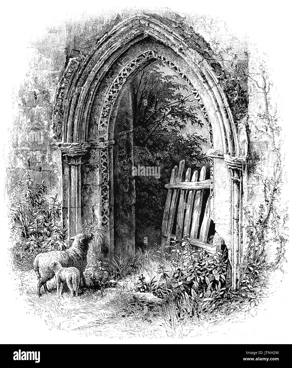 1870: Sheep beside a crumbling, but beautiful Romanesque  Arch at Rievaulx Abbey,  a former Cistercian abbey in Rievaulx, near Helmsley in the North York Moors National Park, North Yorkshire, England. Opened in 1132 and headed by the Abbot of Rievaulx, it was one of the wealthiest abbeys in England until it was dissolved by Henry VIII of England in 1538. - Stock Image