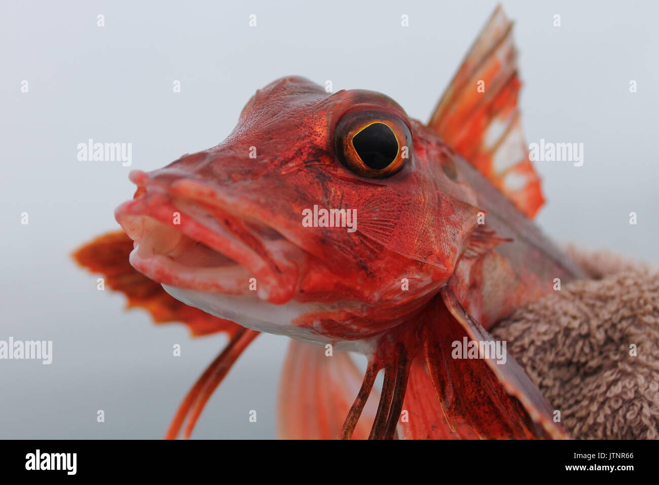 Fish Photograph Stock Photos & Fish Photograph Stock Images - Alamy