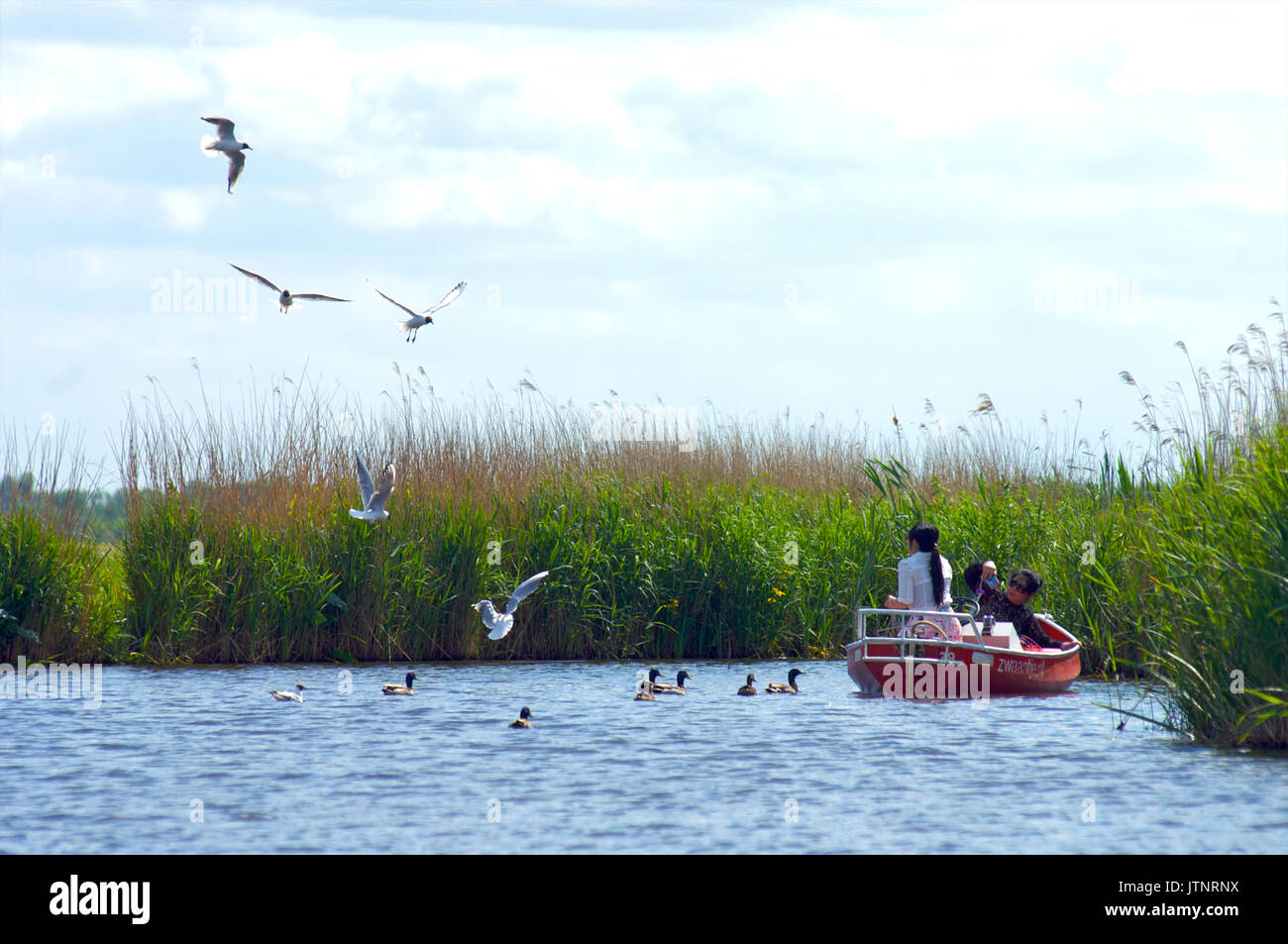 Japanese tourist couple in a boat feeding the birds and ducks on lake Bovenwijde near Giethoorn, the Netherlands - Stock Image