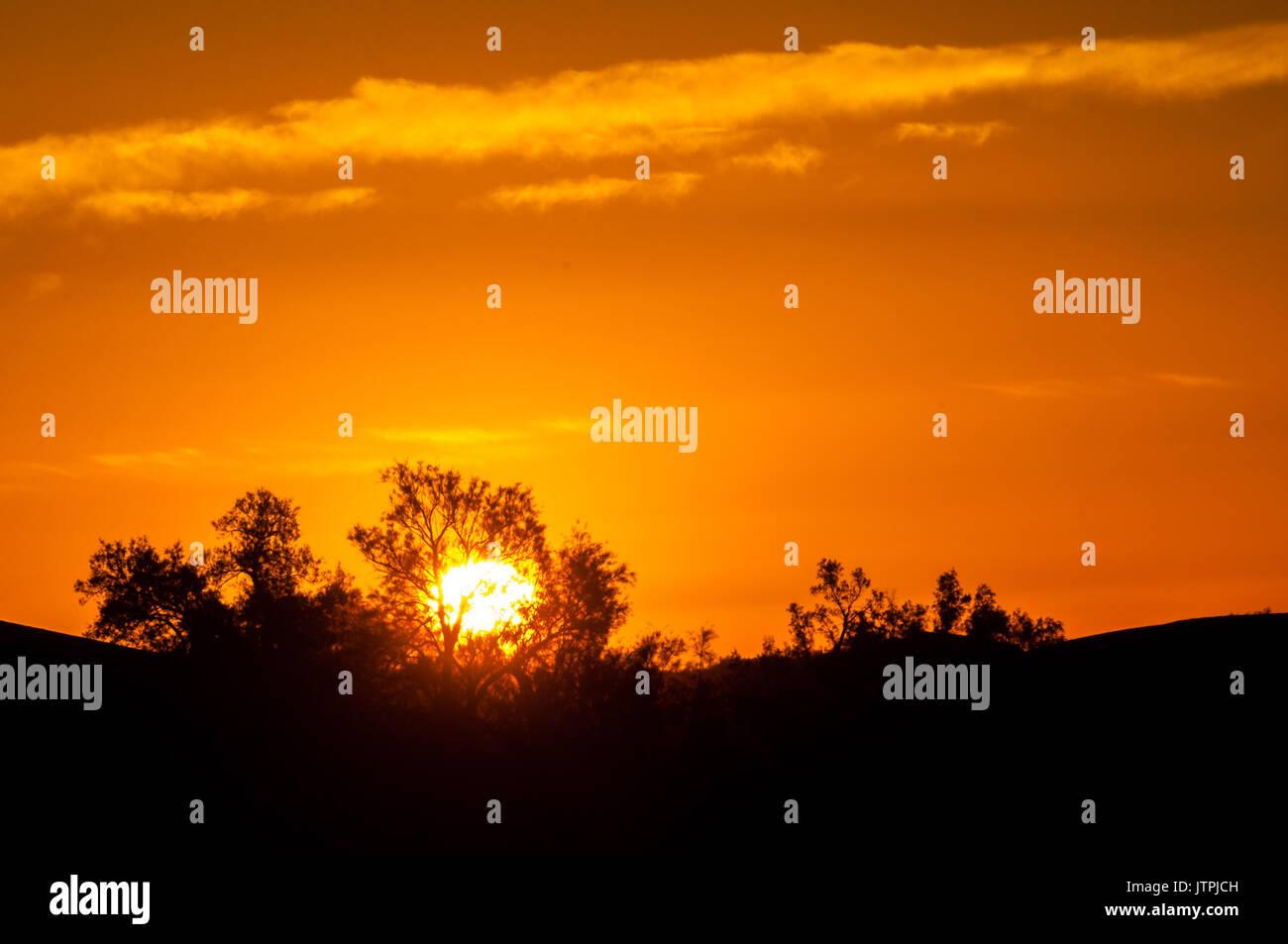 Sunrise behind bushes - Stock Image