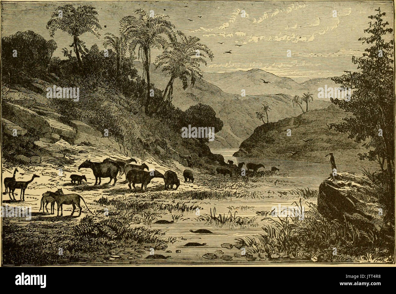'Ridpath's history of the world; being an account of the ethnic origin, primitive estate, early migrations, social conditions and present promise of the principal families of men ..' (1897) - Stock Image