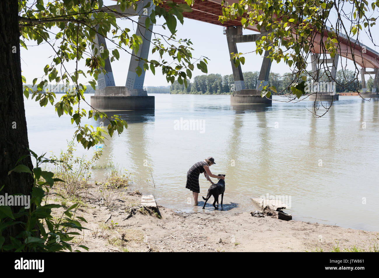 Woman cooling down her dog at river on hot day.   Mission, BC Canada - Stock Image