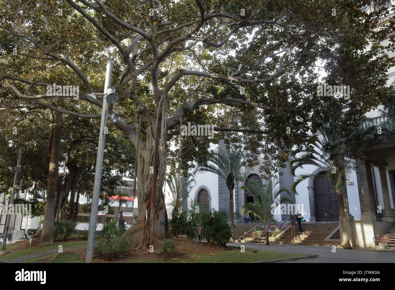 St. Francis square and its centuries-old trees in Santa Cruz de Tenerife, Spain Stock Photo