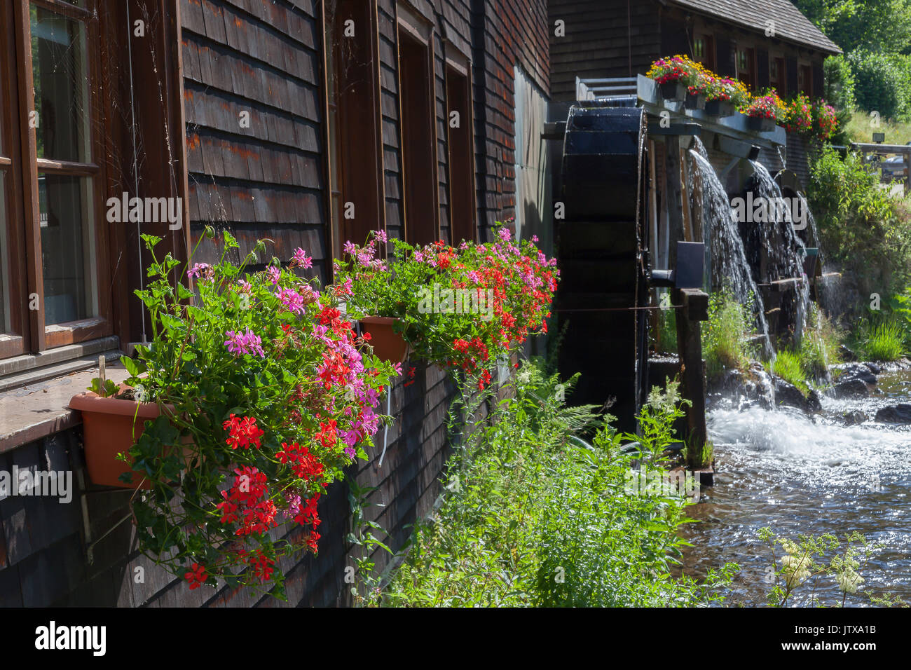 Famous Watermill Hexenlochmuehle in Black Forest - Stock Image