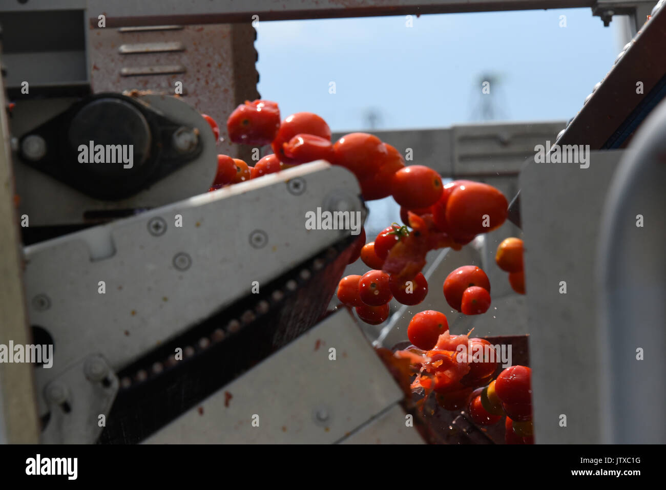 Tomato Factory Stock Photos & Tomato Factory Stock Images - Alamy