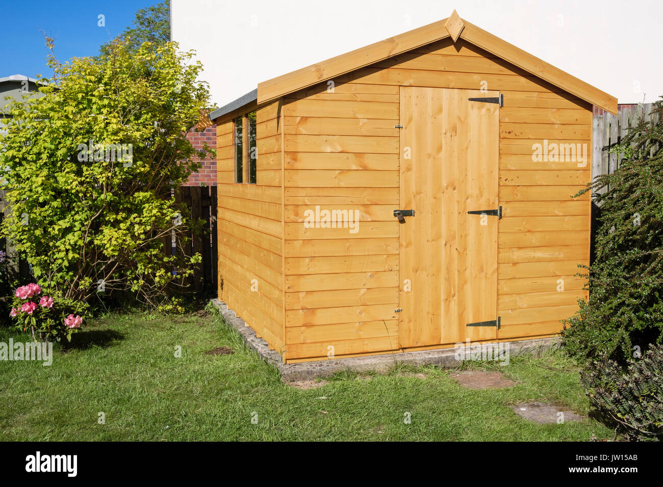 New wooden garden shed in corner of a domestic backyard. UK, Britain - Stock Image