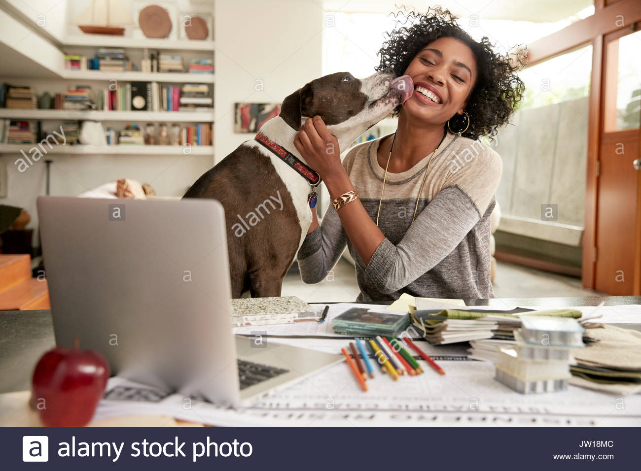 Dog licking face of female interior designer working at home office desk - Stock Image