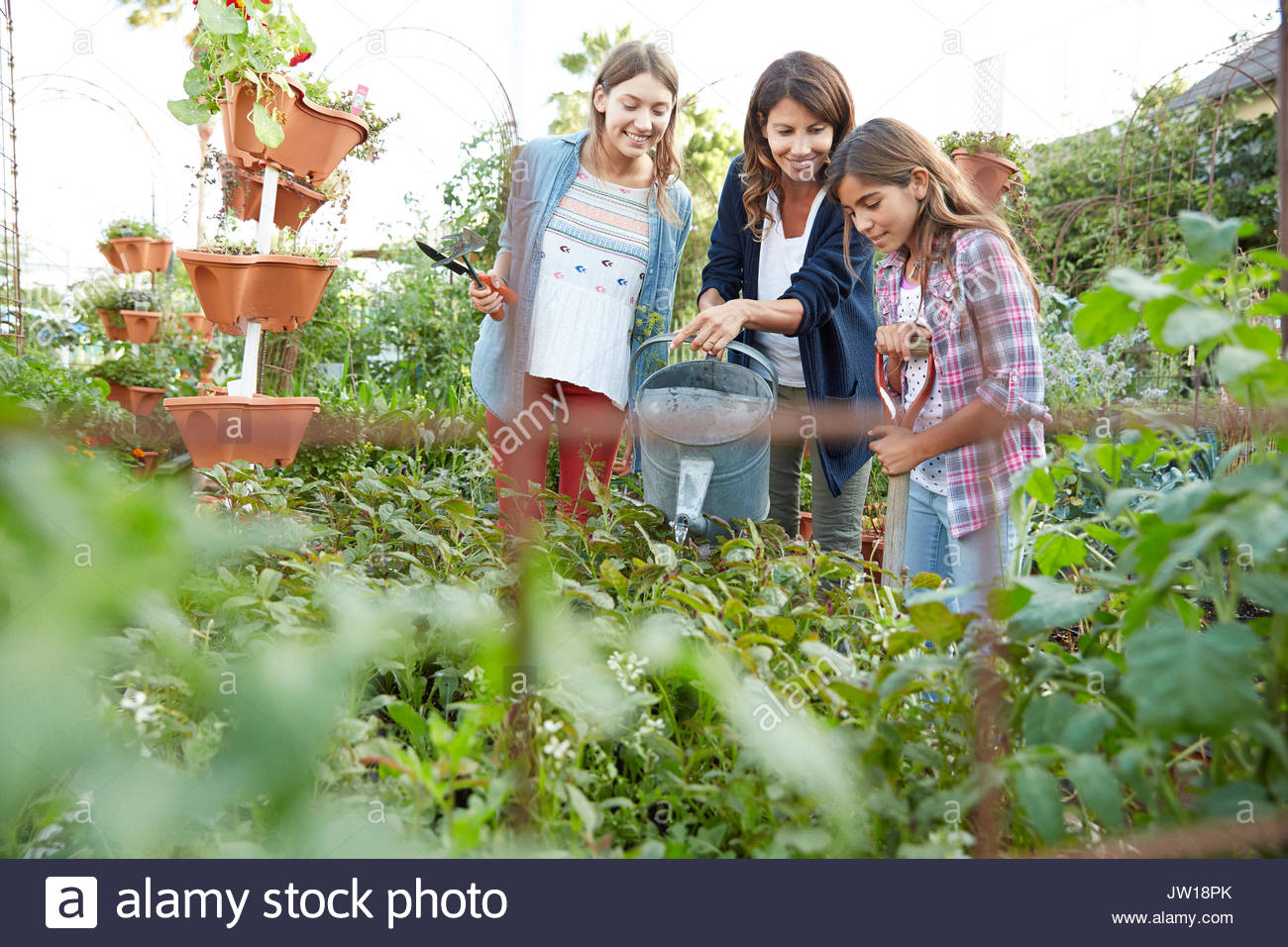 Latina mother and daughters watering plants in vegetable garden - Stock Image