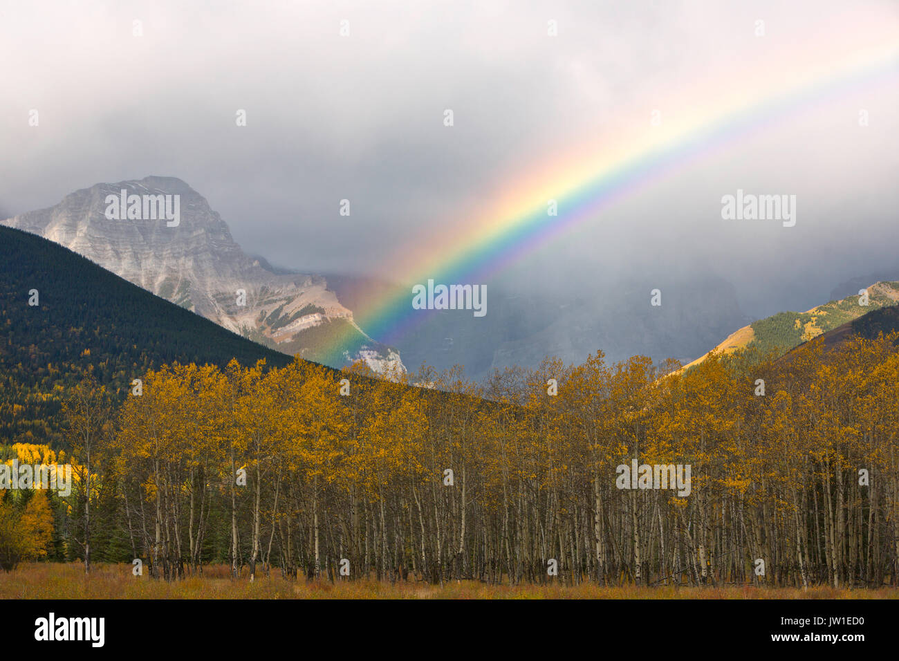 A rainbow arcs over fall aspen in the Canadian Rockies of Banff National Park. Canada Stock Photo