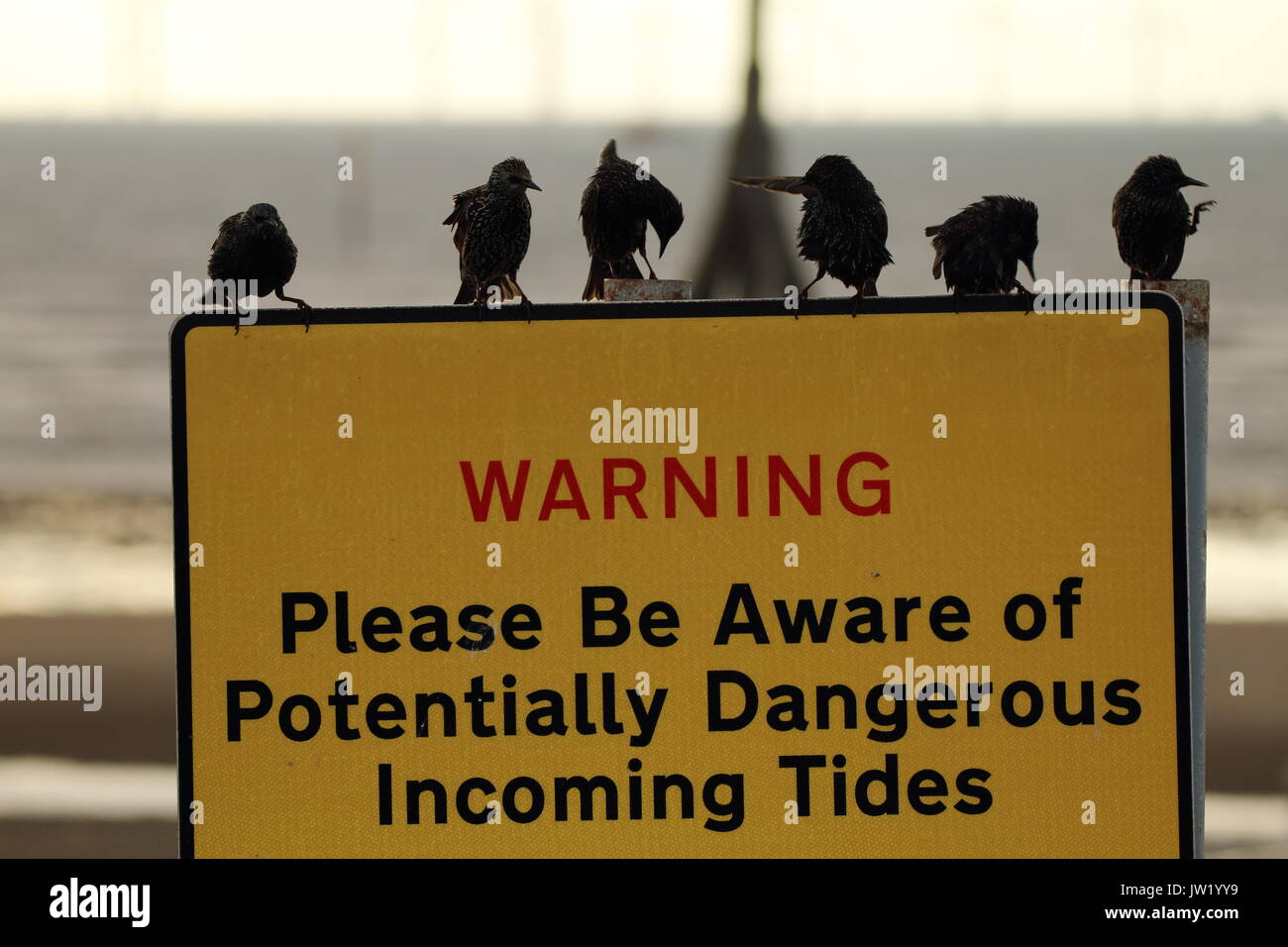 Birds on large yellow Warning notice, Crosby Beach, Liverpool - Stock Image