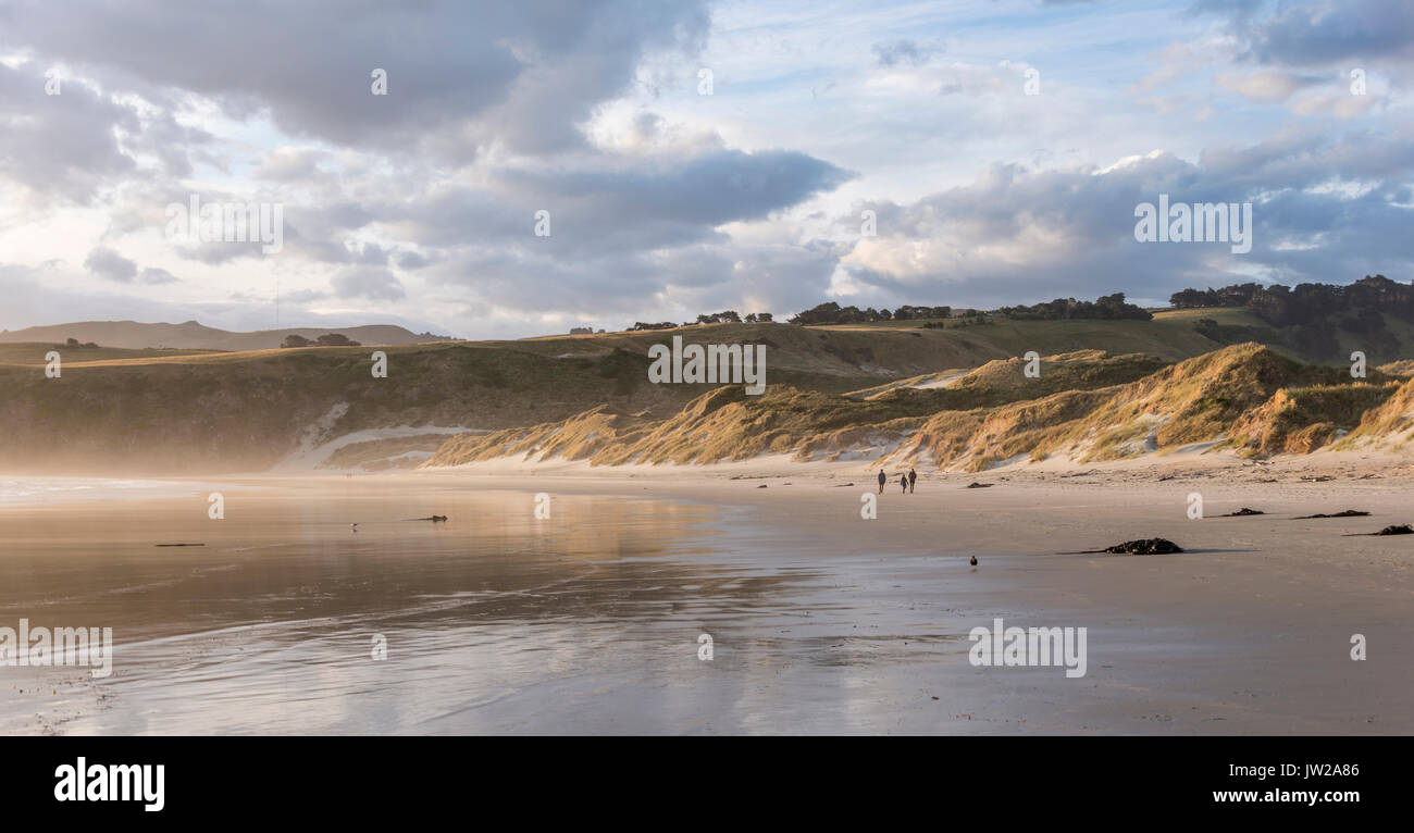 Sandy beach, Sandfly Bay, Otago, New Zealand - Stock Image