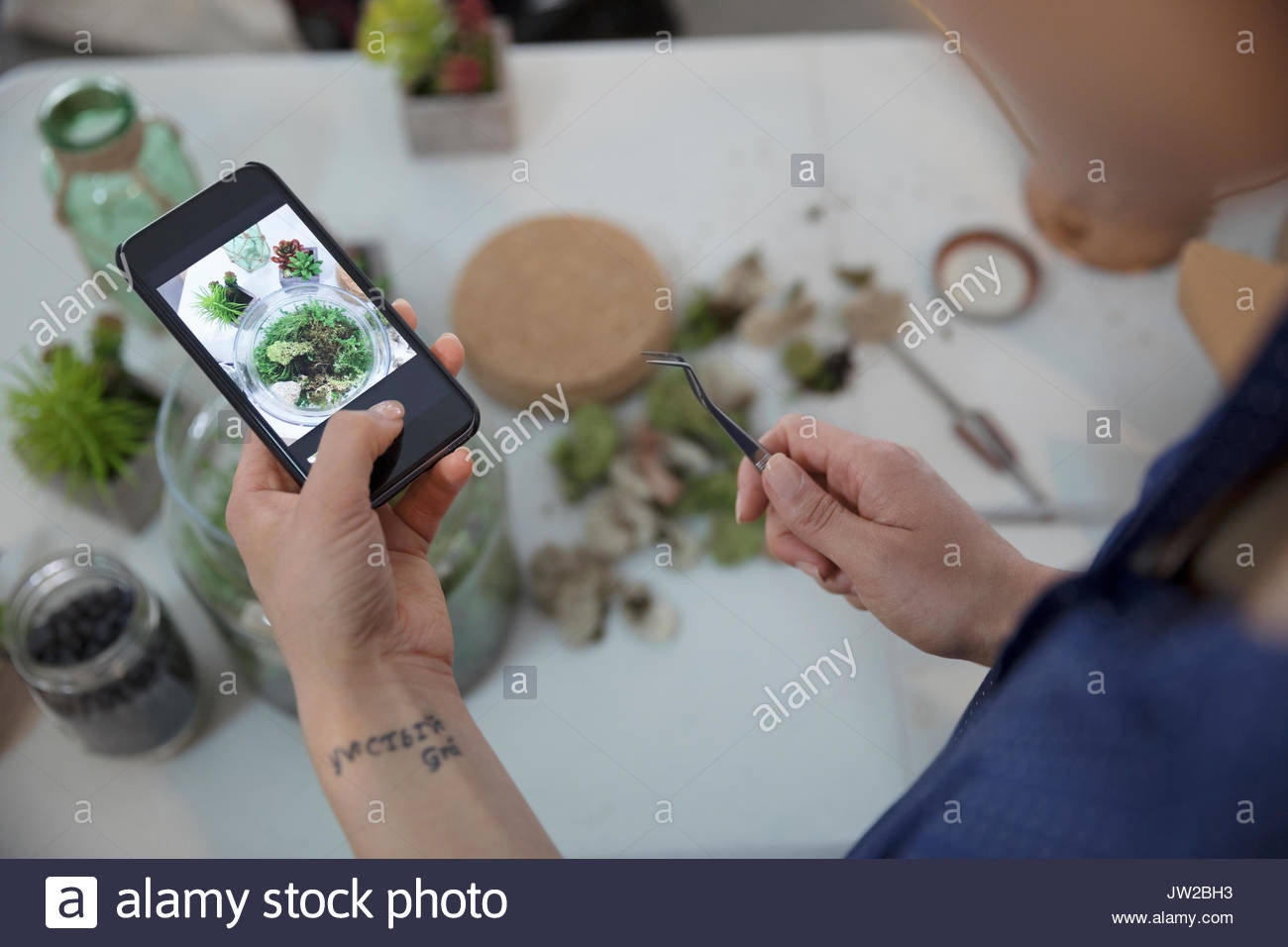 Woman with camera phone photographing and making plant terrarium - Stock Image