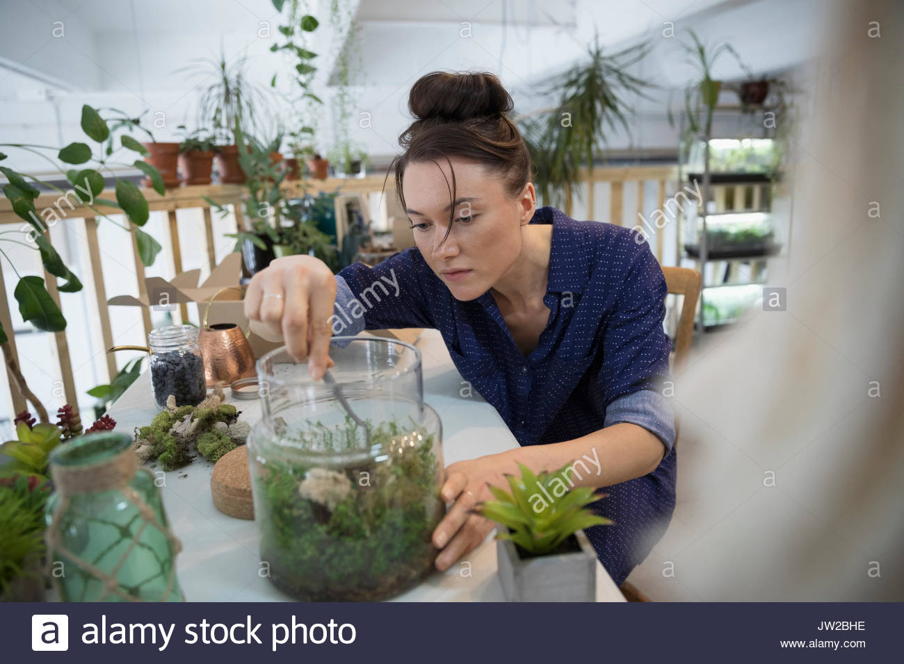 Focused female shop owner making succulent plant terrariums at workbench - Stock Image