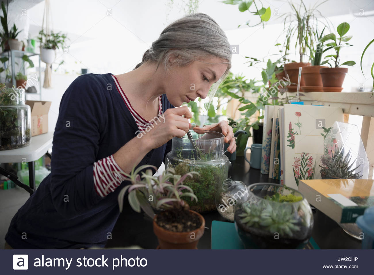 Woman using tweezers, making succulent plant terrarium - Stock Image