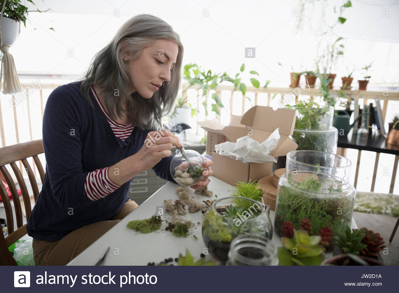 Female shop owner using tweezers, making succulent plant terrariums - Stock Image