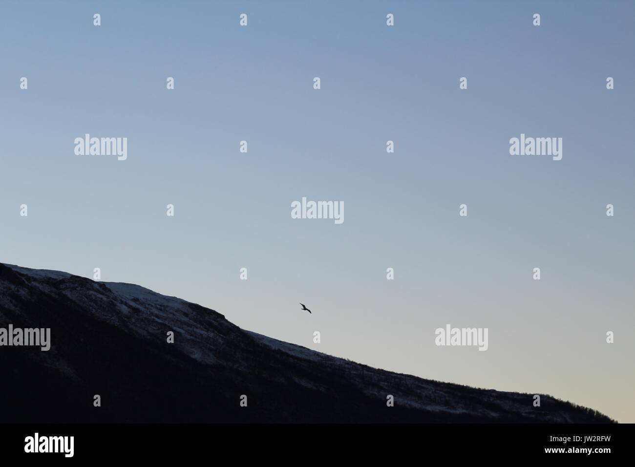 Bird flying over a mountain in clear blue sky - Stock Image