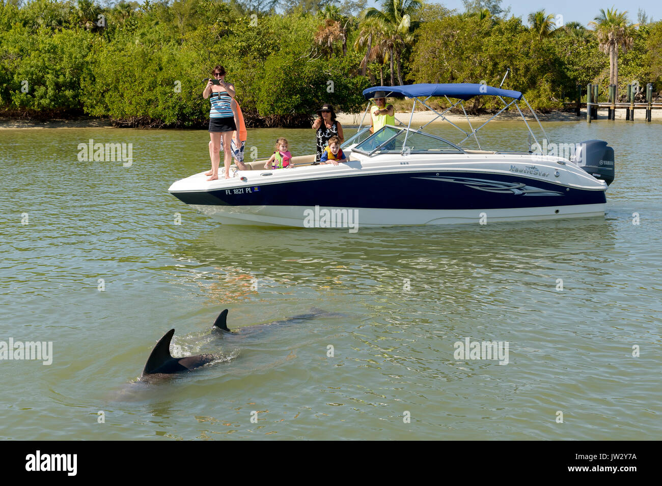 Tourists on boat watching bottlenose dolphins off Keeywaydin Island, Florida, USA - Stock Image