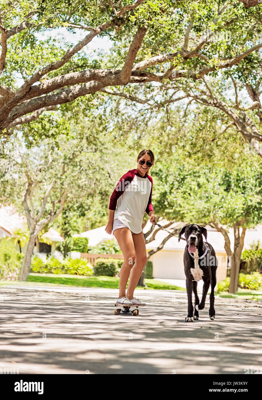 Woman on skate board with Great Dane - Stock Image
