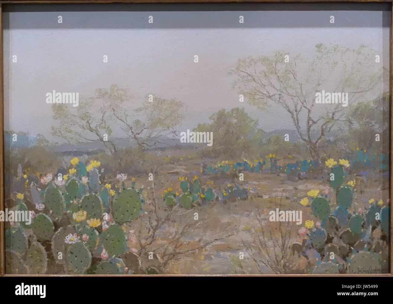 Cacti In Bloom San Antonio Texas By Julian Onderdonk