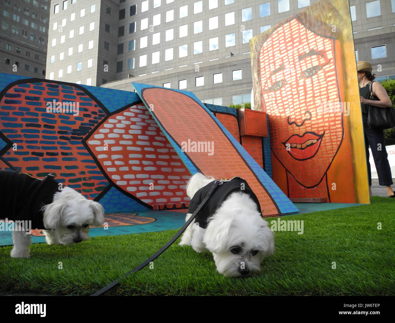 New York Us 10th Aug 2017 The Two Maltese Shih Tzus Lily L And