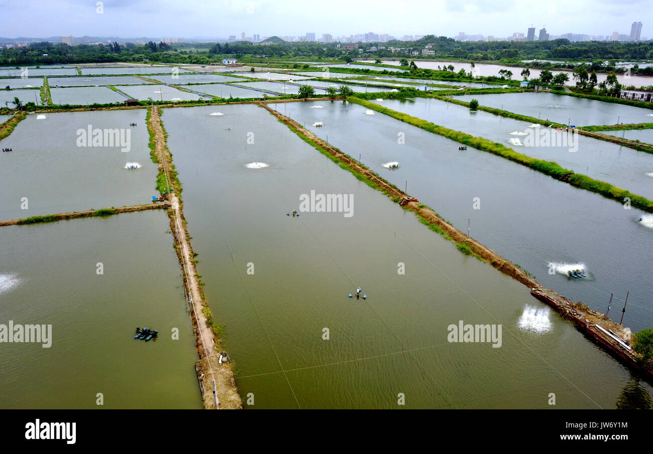 Qinzhou. 10th Aug, 2017. Photo taken on Aug. 10, 2017 shows a general view of shrimp ponds in Jiuya Village of Jianshan Stock Photo