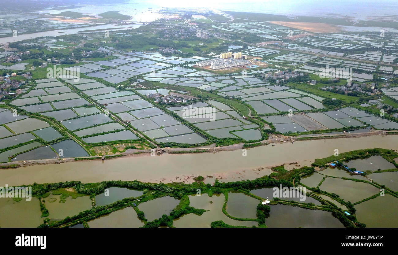 Qinzhou. 10th Aug, 2017. Photo taken on Aug. 10, 2017 shows a general view of shrimp ponds along the Qin River in Stock Photo