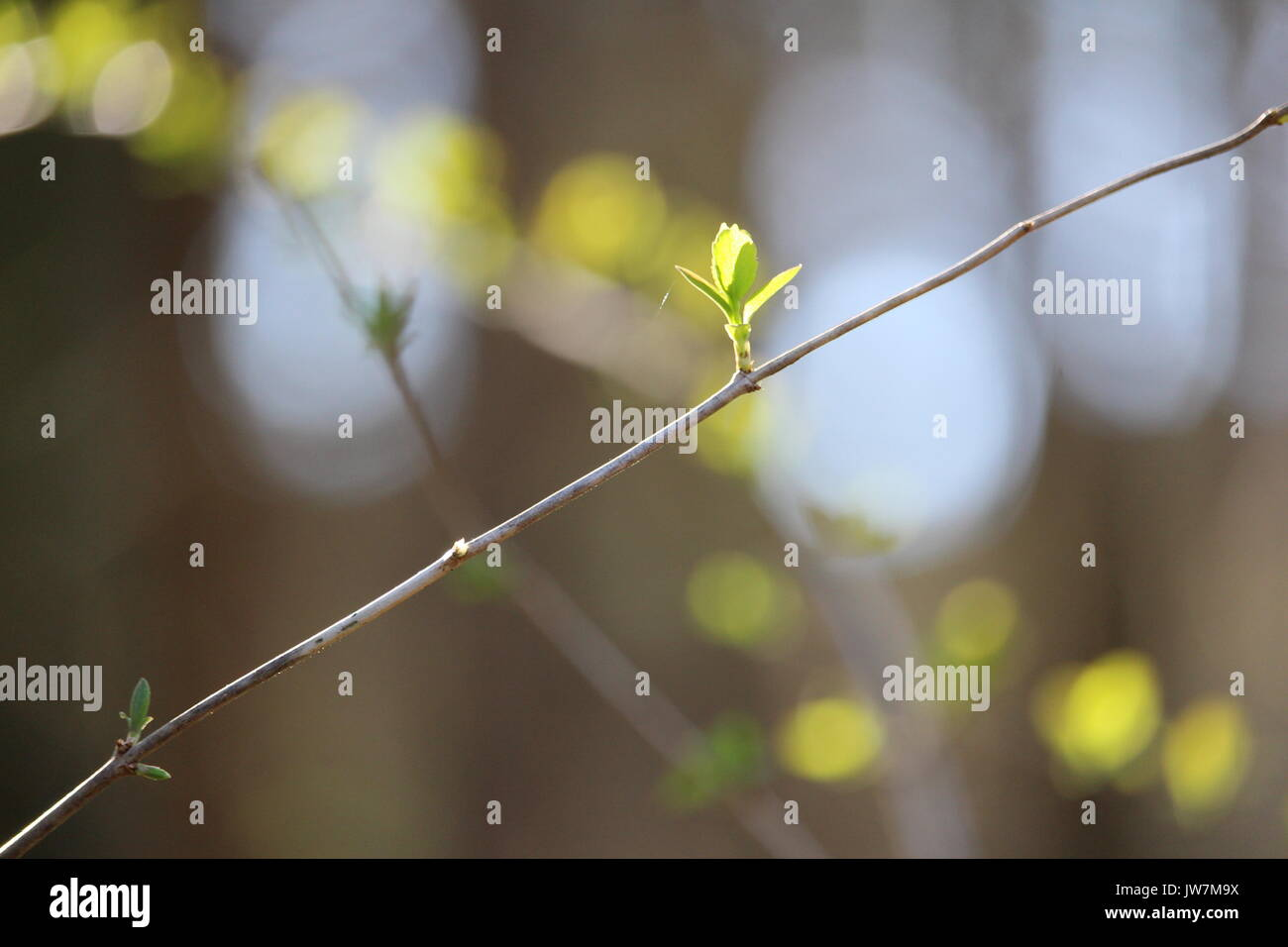 Branch in the sun - Stock Image