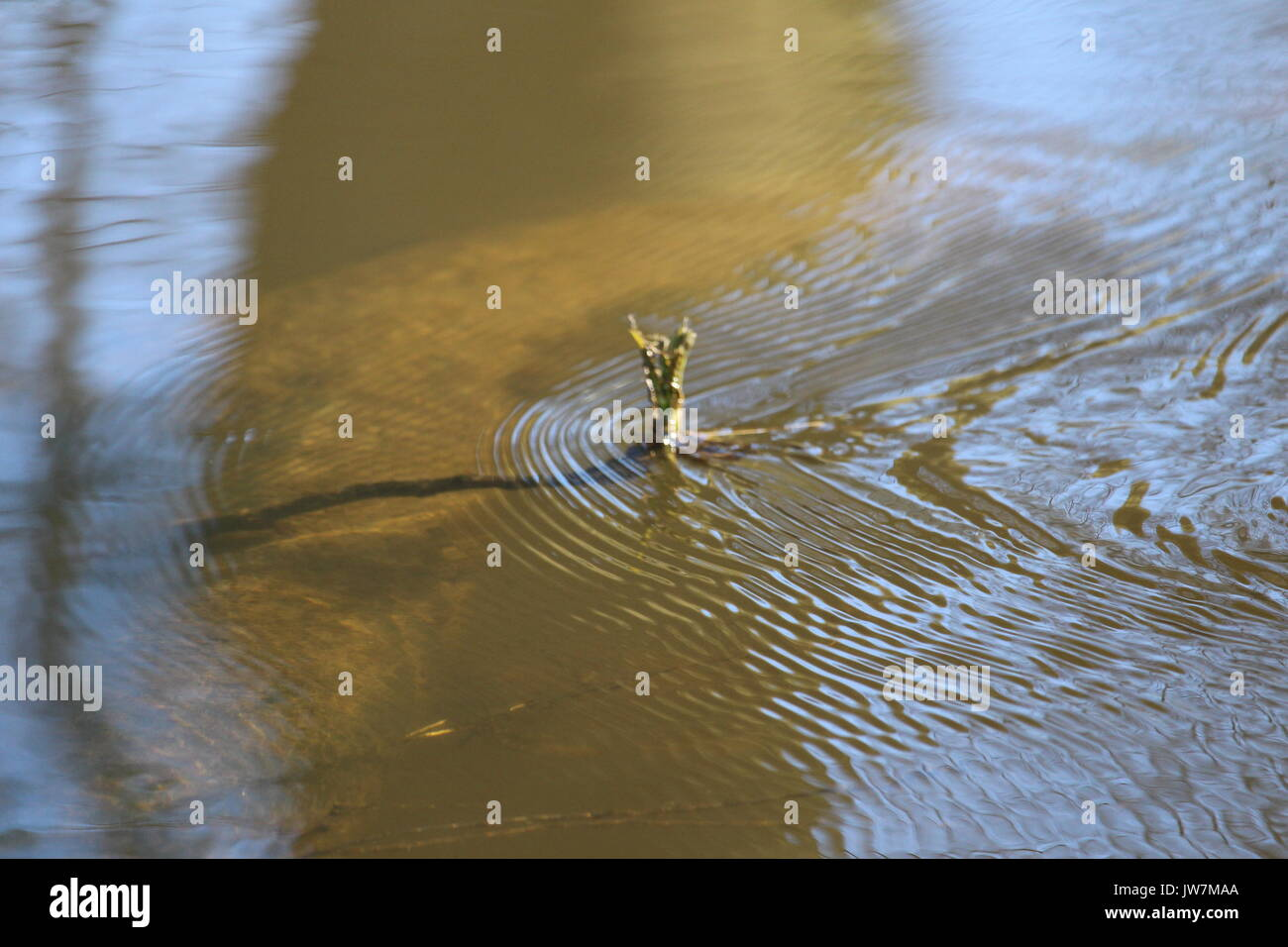 Branch in a river - Stock Image