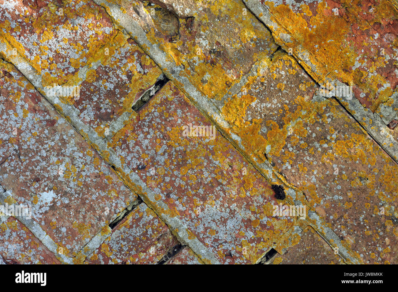 old lichen covered red brick wall with crumbling and missing mortar in the joints. old weather beaten brickwork. - Stock Image