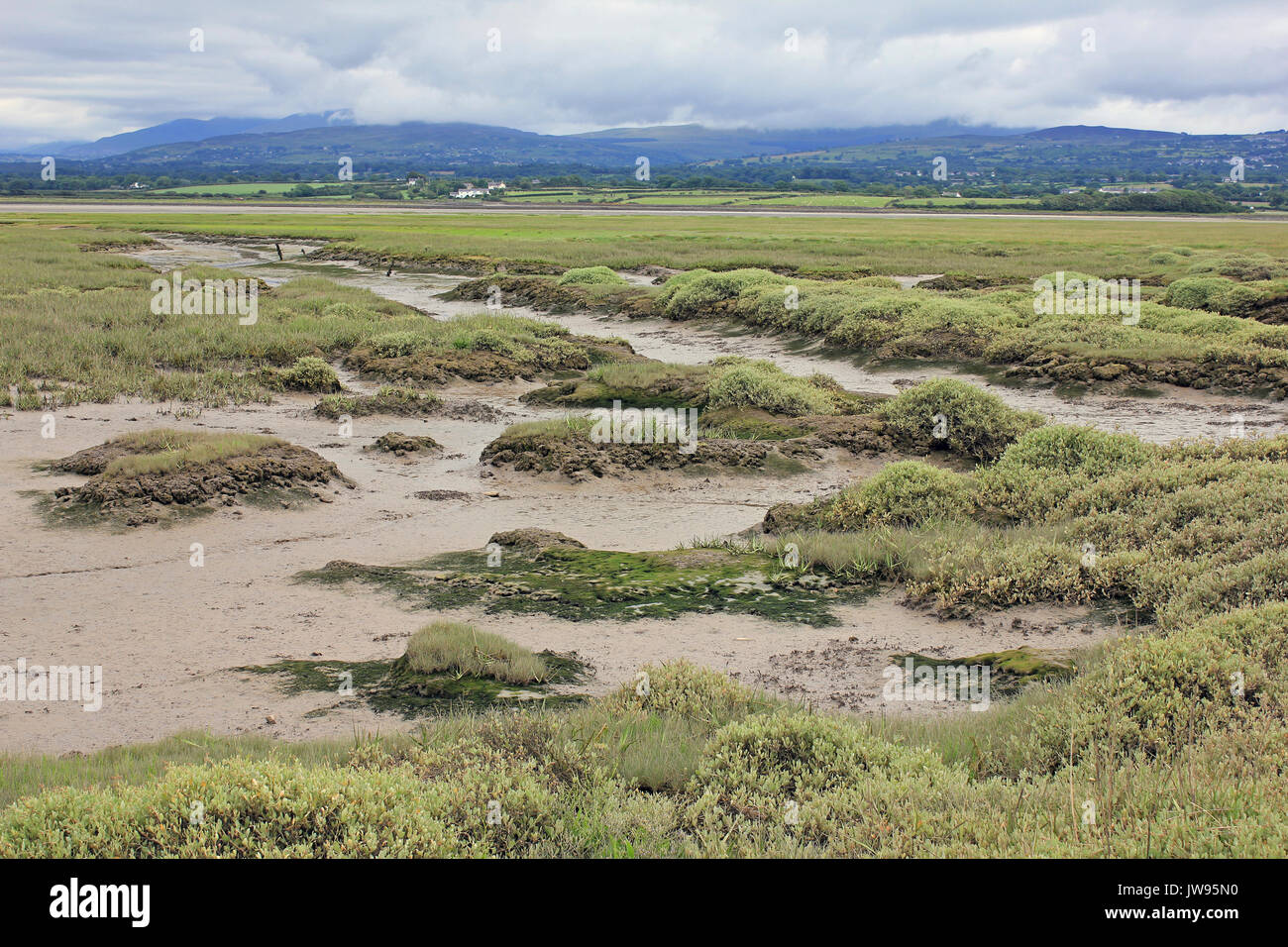 Saltmarsh with Tidal creeks at Dinas Dinlle, Caernarvon, Wales Stock Photo