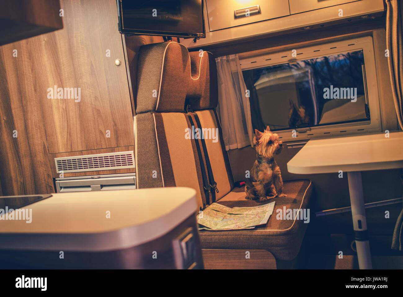 Pet In A Camper RV Motorhome Australian Silku Terrier The Van Seating Next
