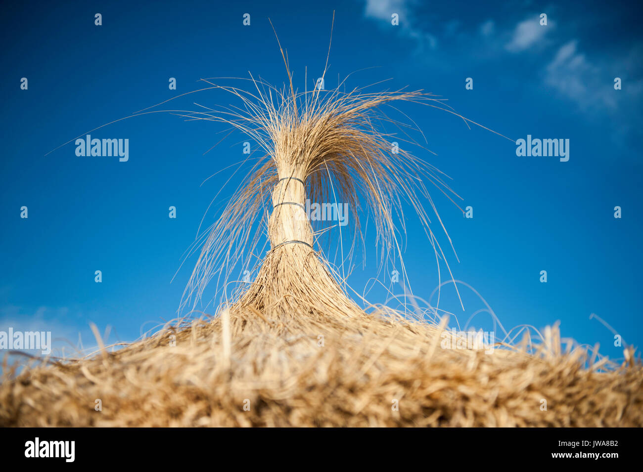 Close-up of a Starw Parasol - Stock Image