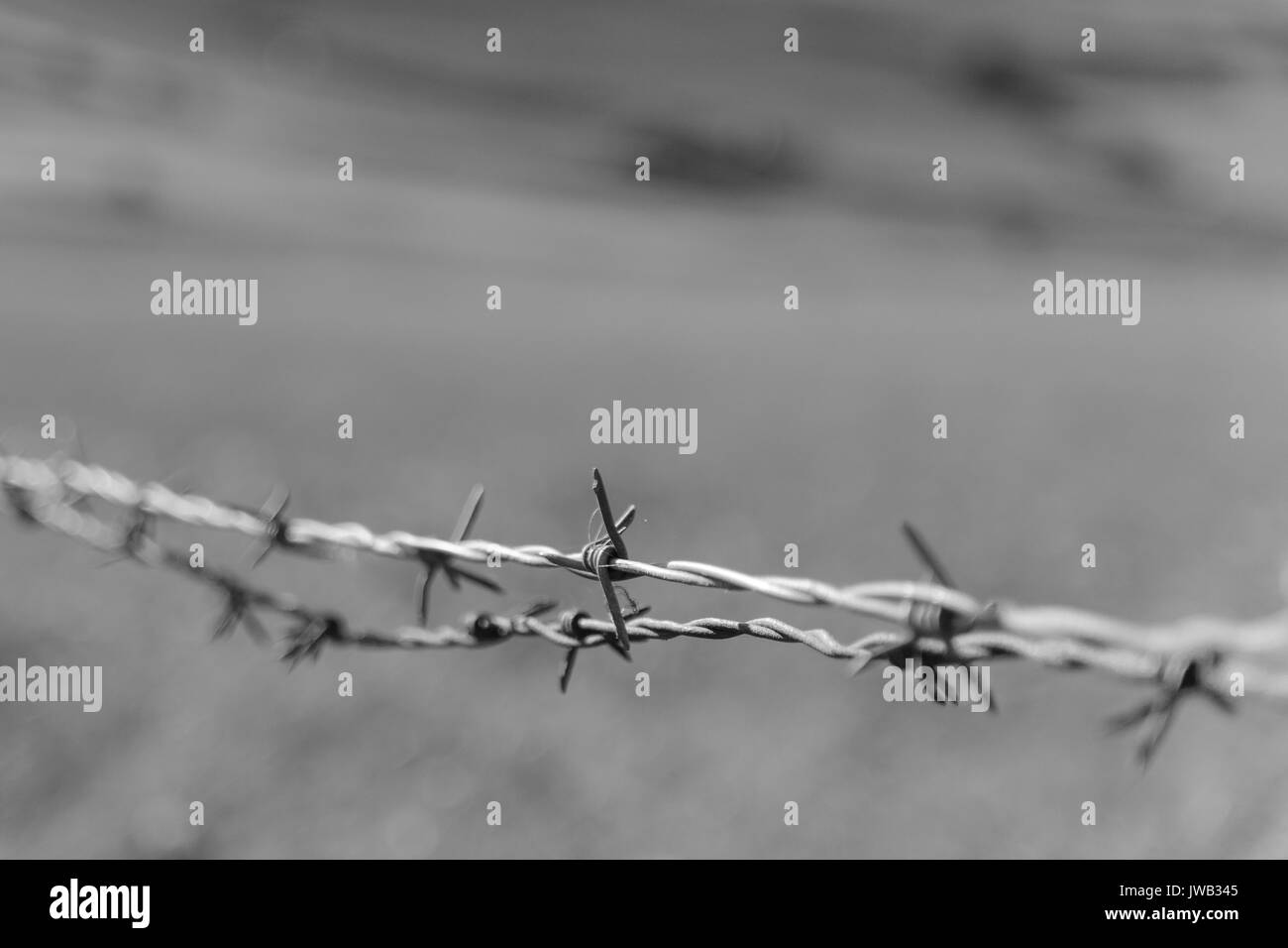 Black and white close up of a barbed wire with blurred background. Landscape format. - Stock Image
