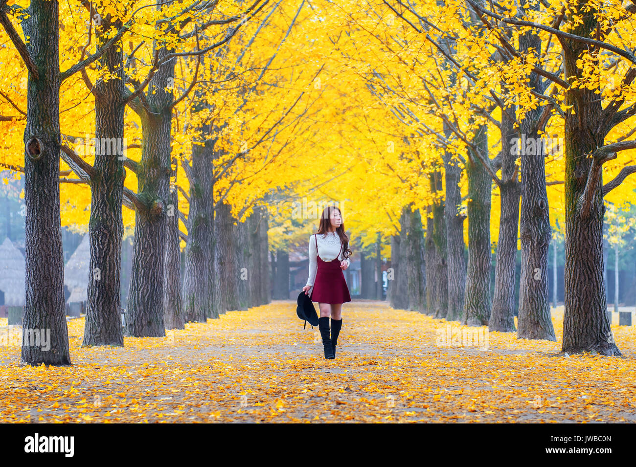 Nami Island High Resolution Stock Photography And Images Alamy