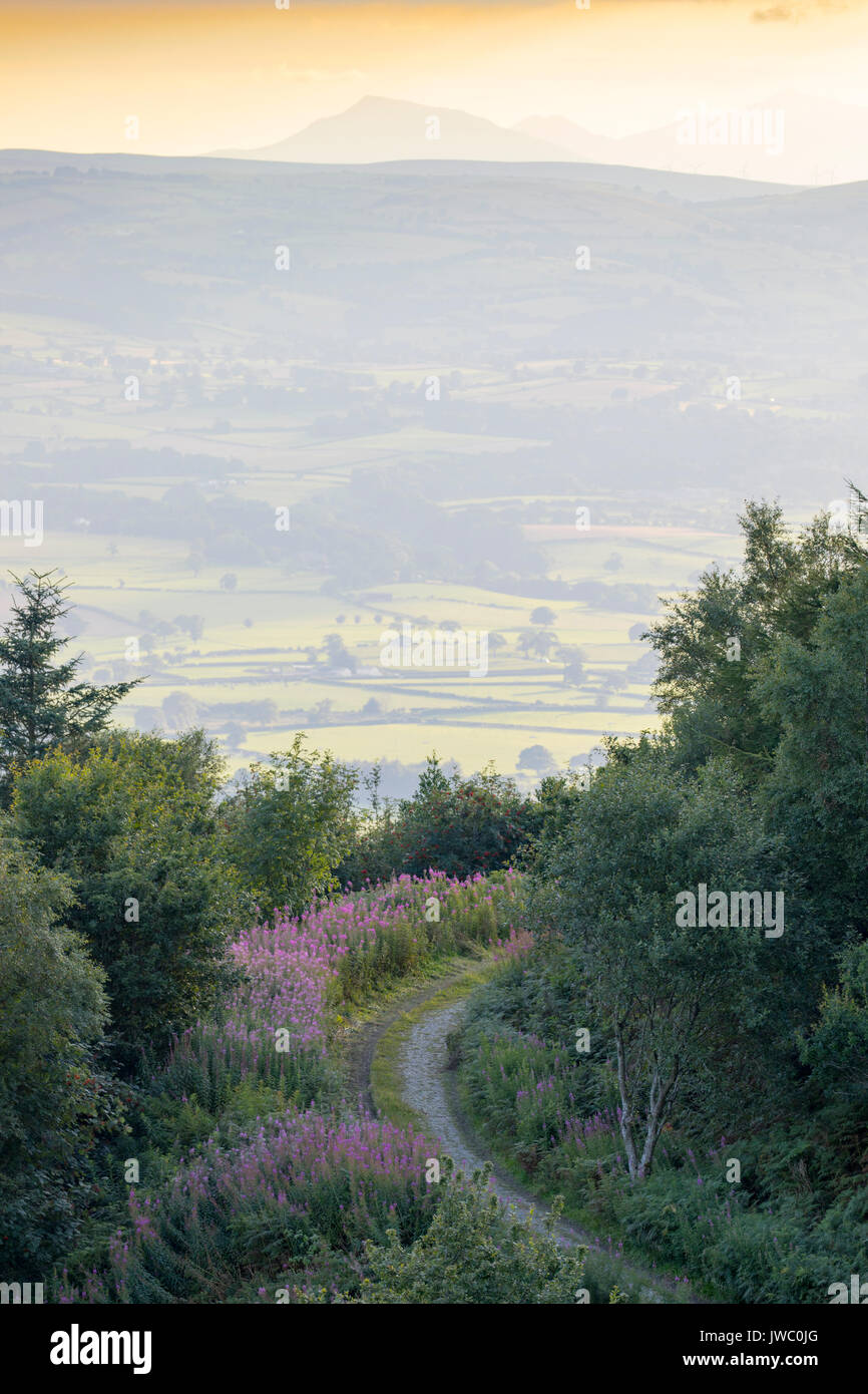 A view from the Clwydian Range across the Vale of Clwyd with Snowdonia National Park in the far distance, Denbighshire, Wales - Stock Image